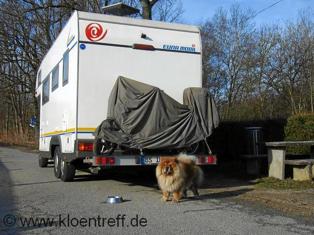 Bild unseres Chow Chow